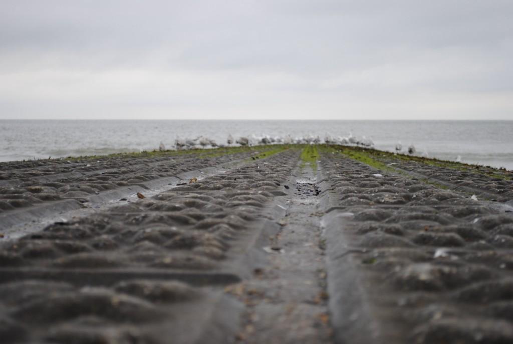 În Belgia: La Marea Nordului, în şa (FOTO şi VIDEO)